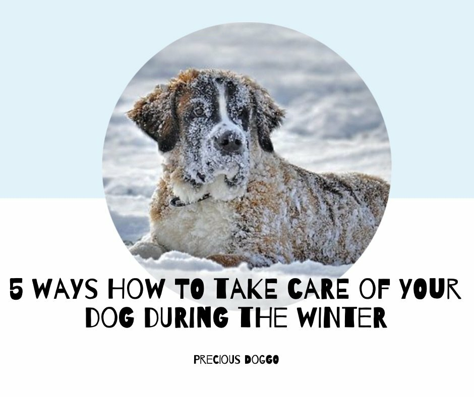 5 ways how to take care of your dog in winter