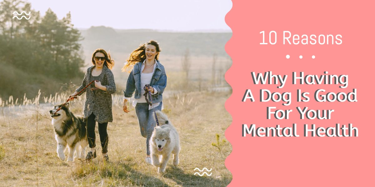 Dogs are amazing for your mental health