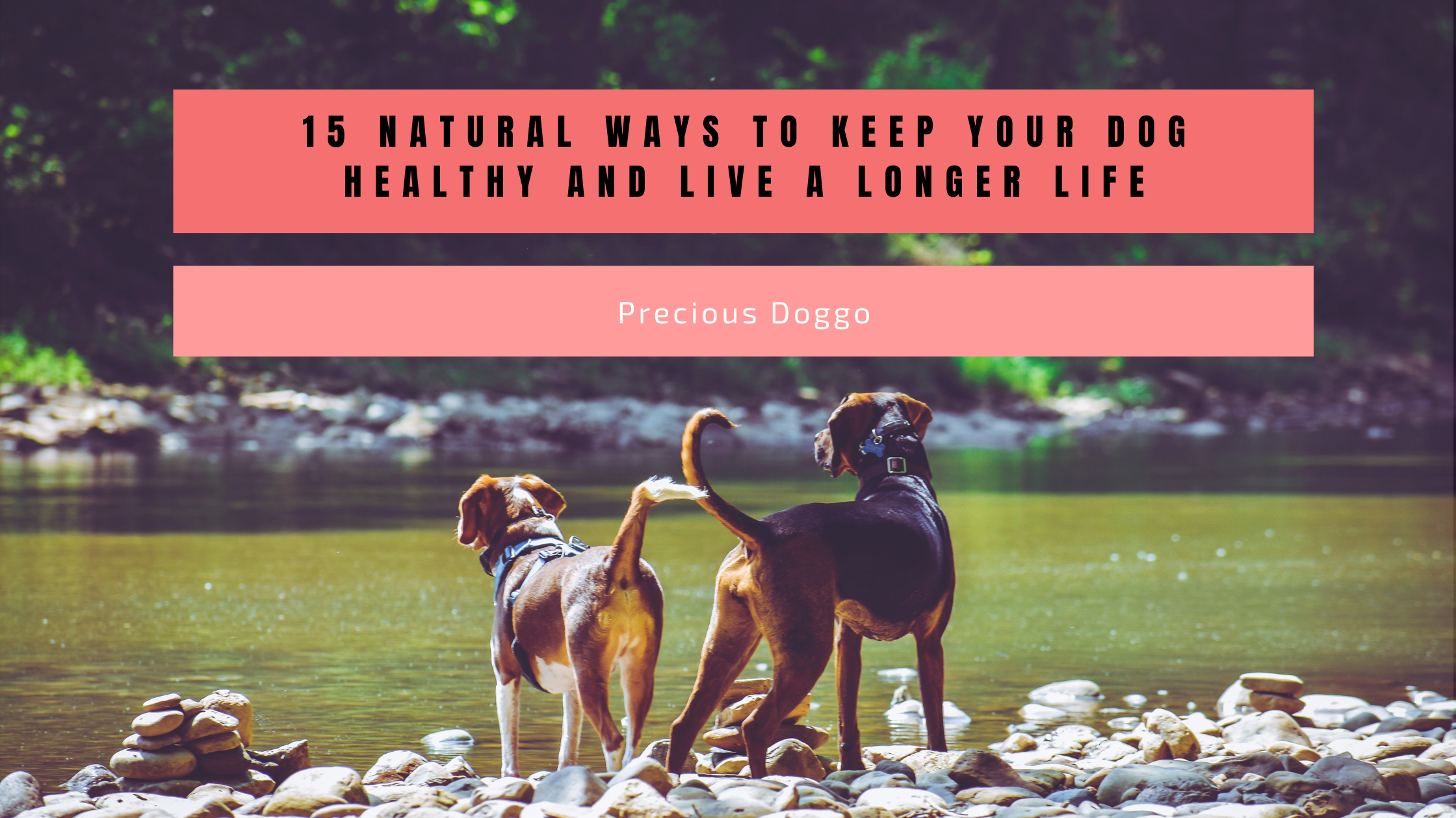 Ways to keep your dog healthy and live longer